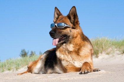 Foto bij Met uw hond op vakantie