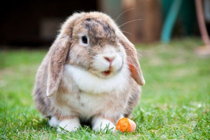Foto bij Een nieuw konijn