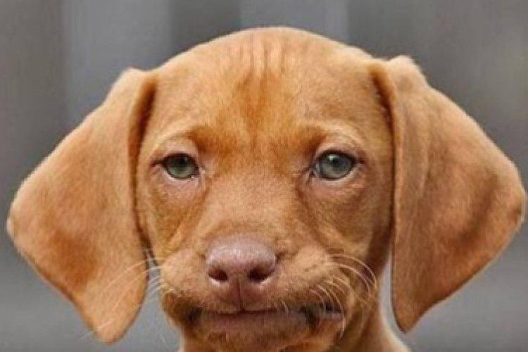 Foto bij Wie kijkt er regelmatig naar het gebit van zijn hond of kat?